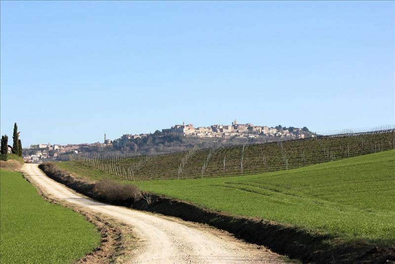 Azienda Agricola in vendita a Torrita di Siena, 7 locali, prezzo € 1.250.000   Cambio Casa.it