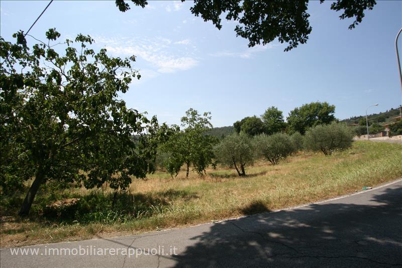 Terreno Agricolo in Vendita a Sinalunga