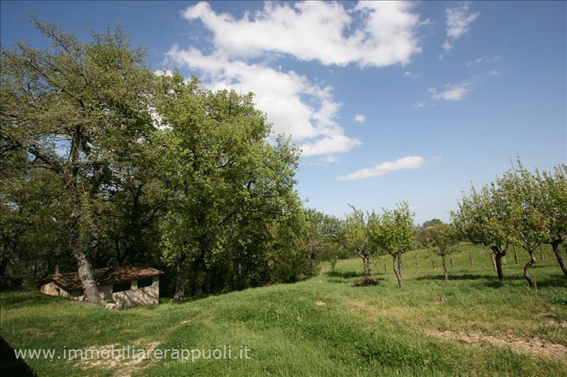 Rustico / Casale in vendita a Torrita di Siena, 6 locali, prezzo € 850.000 | Cambio Casa.it