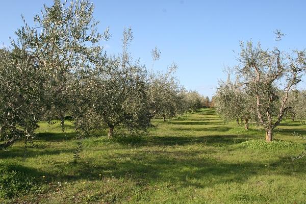 Terreno Agricolo in vendita a Sarteano, 9999 locali, Trattative riservate | CambioCasa.it